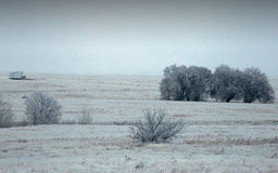 Winter Meadow with Trees Stock Images