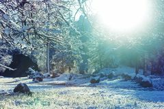 Winter meadow Stock Photography
