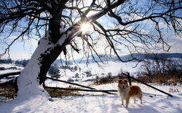 Winter meadows and dog Stock Photo