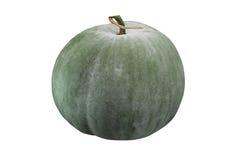 Winter Melon. Big green winter melon with stalk Stock Image