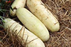 Winter melon Royalty Free Stock Images