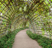 Winter melon plant tunnel Royalty Free Stock Photos