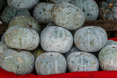 Winter Melon, White Gourd, Winter Gourd, Ash Gourd,Benincasa his Stock Images