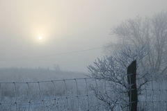 Winter Mist Stock Photography