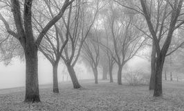 Winter mist  monochrome Royalty Free Stock Image