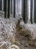 Winter misty forest Royalty Free Stock Images