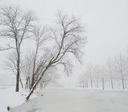 Winter Misty lake Stock Images