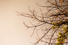 Winter mit Baumasten und Himmel Lizenzfreie Stockbilder