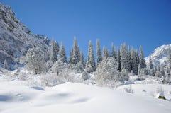 Winter mit Bergen und Pelzbäumen im Schnee Lizenzfreie Stockbilder