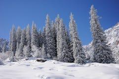 Winter mit Bergen und Pelzbäumen im Schnee Stockbild