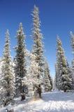 Winter mit Bergen und Tannenbäumen im Schnee Lizenzfreie Stockbilder
