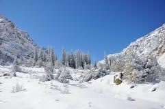 Winter mit Bergen und Tannenbäumen im Schnee Stockbild