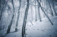 Winter mit Frost auf Bäumen im Wald Lizenzfreies Stockfoto