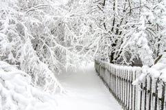 Winter mit Schnee auf Bäumen Lizenzfreie Stockfotos
