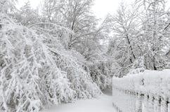 Winter mit Schnee auf Bäumen Stockbilder