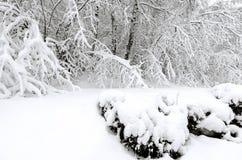Winter mit Schnee auf Bäumen Stockbild