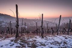 Winter mit Schnee in der Dämmerung in einem Weinberg Stockbild