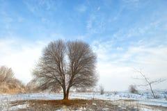 Winter mit Schnee und einem einsamen Baum auf einem Gebiet Stockfoto