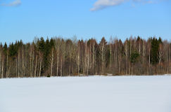 Winter mixed forest of coniferous and deciduous trees Stock Images