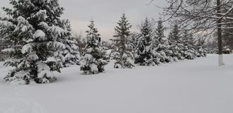 Winter in Moldau lizenzfreies stockfoto