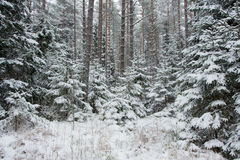 Winter moment Royalty Free Stock Photos