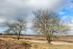 Winter at moorland Royalty Free Stock Images