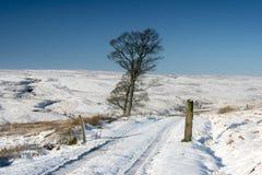Winter Moorland Landscape Stock Image