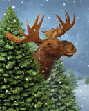 Winter Moose Royalty Free Stock Image