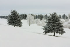 Winter-Morgen Stockbild