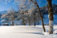 Winter Morning. Snowy winter morning Royalty Free Stock Image