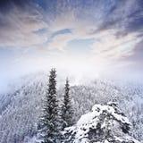Winter morning Stock Photos