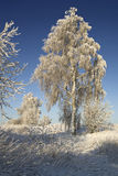 Winter morning Royalty Free Stock Image