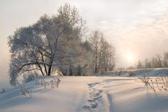 Winter morning. Sunrise in the winter morning Stock Photography