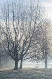 Winter morning. A beautiful sunny morning in winter stock images