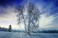 A winter morning Royalty Free Stock Images