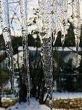Winter morning. Big cicles. stock photo