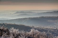 Winter morning in Buda Hills and mountainous Budapest Hungary. Winter morning sunlit Buda Hills and mountainous Budapest, Sashegy, Svabhegy, Hegyvidek, 11th stock images