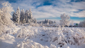 Winter morning in the Carpathian village. Stock Image