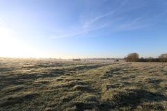 Winter morning in the countryside. A frosty winter`s morning in the English countryside with the sun rising off the fields Stock Images