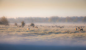 Winter morning in the countryside. A frosty winter`s morning in the English countryside with the sun rising off the fields Royalty Free Stock Image