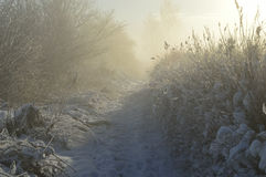 Winter morning. Covered with snow on a sunny lane and frosty morning Stock Photos