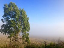 Winter morning fog cattle grazing farm land Queensland Australia. An early, crisp, foggy, winter morning with a beautiful blue sky and the silent, still fog sits stock images