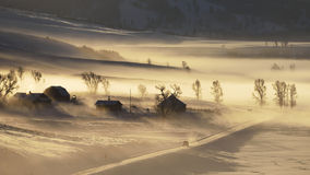 Winter Morning. Morning fog at Lamar Valley in Yellowstone National Park royalty free stock image