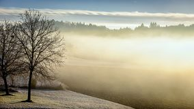 Winter, Morning, Fog, Tree, Forest Stock Images