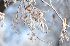 Winter morning royalty free stock photos