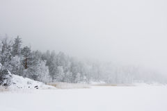 Winter morning on forest lake Royalty Free Stock Images
