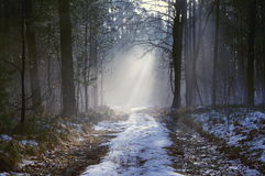Winter morning in the forest. Royalty Free Stock Images