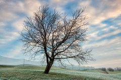 Winter morning on the golf course. Empty golf course in the winter morning in Prague Royalty Free Stock Images