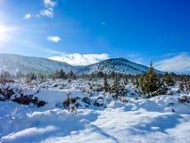 Winter Morning royalty free stock image