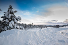 Winter morning. Huge snow banks and trees covered with snow on beautiful winter morning Royalty Free Stock Image